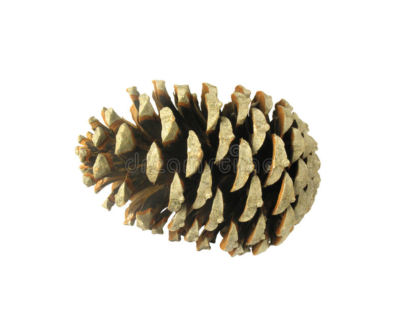 Download Beautiful Pine Cone Isolated On White Stock Photo - Image: 37802660