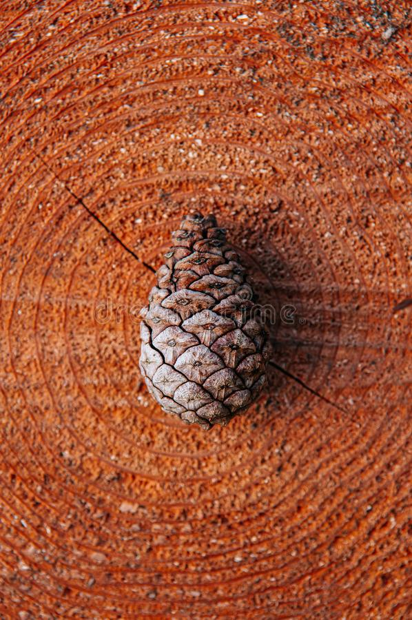 Beautiful pine cone on old tree trunk, top view royalty free stock image