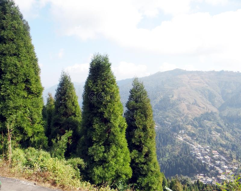 Beautiful pine forest in himalaya royalty free stock photography