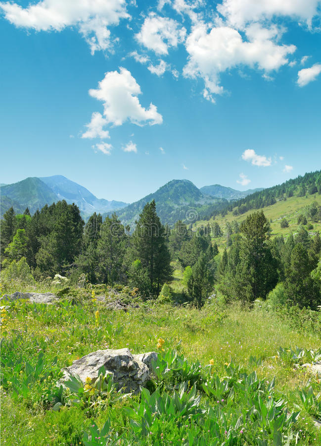Beautiful pine trees on background mountains royalty free stock image