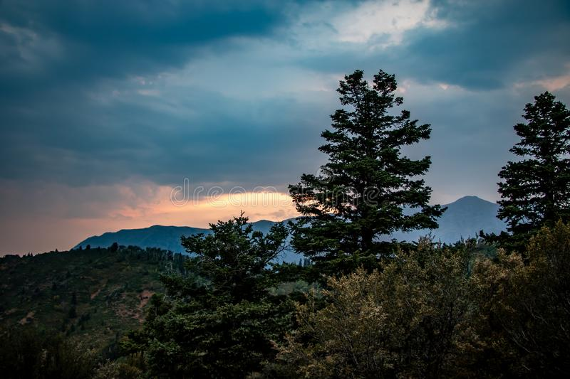 Beautiful pine trees in the mountians at sunset stock photo