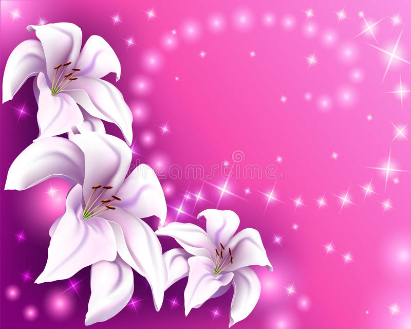 Beautiful pink background with white lilies vector illustration