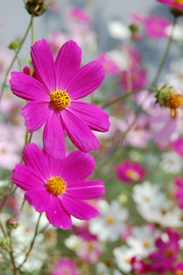 Download Beautiful Pink Bell Flowers Stock Image - Image of petal, forest: 28895571