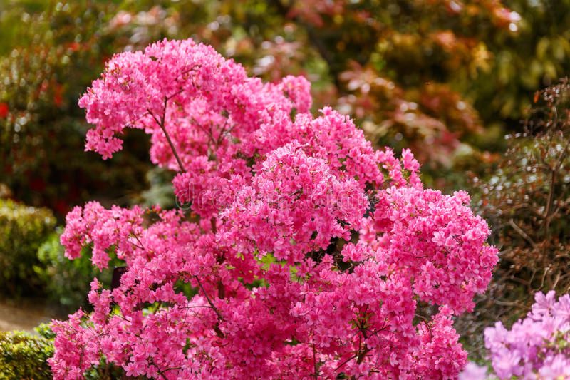 Beautiful pink bloom in the middle of a botanical garden. Beautiful pink bloom in the middle of a great botanical garden stock photo