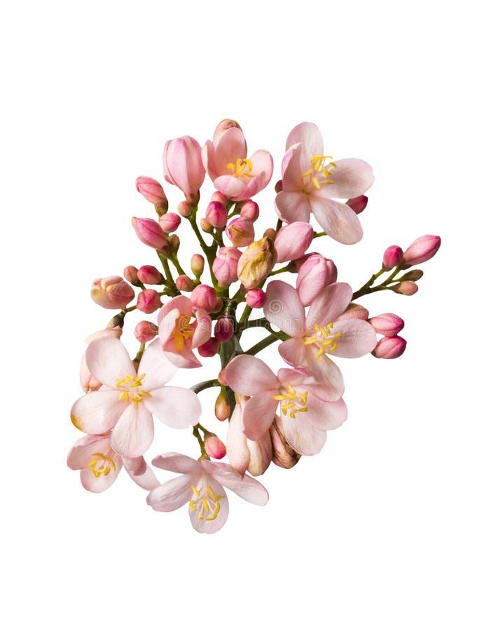 Download Beautiful Pink Bouguet Flowers Stock Photo - Image: 33567158