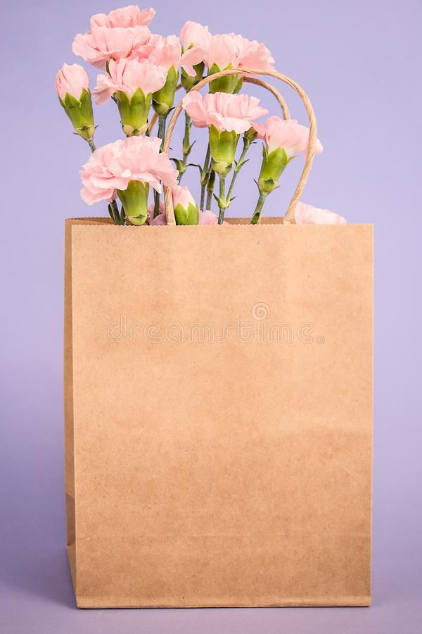 Beautiful pink carnation flowers into craft paper bag. Empty paper bag for your design. Spring`s concept royalty free stock images