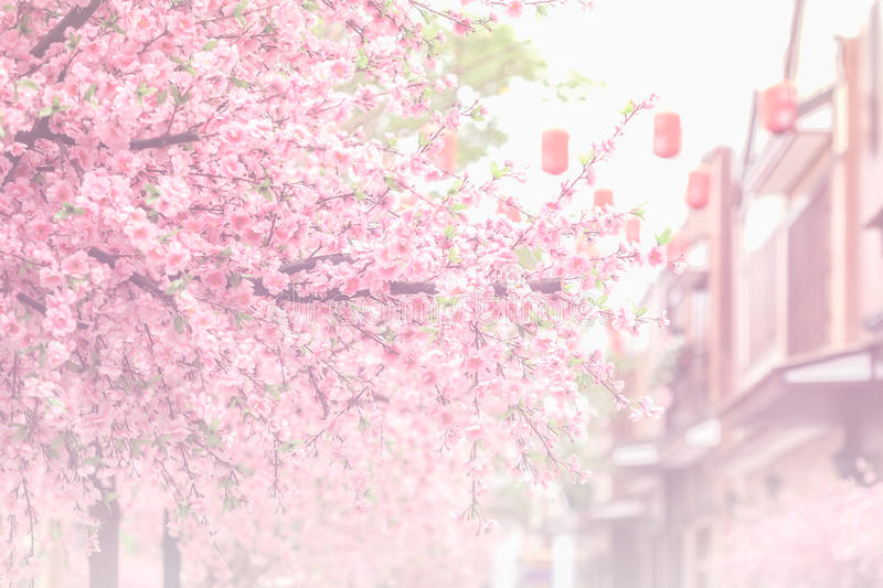 Beautiful pink cherry blossom (Sakura) flower, and soft focus pr. Ocess with vintage japan building background stock photography