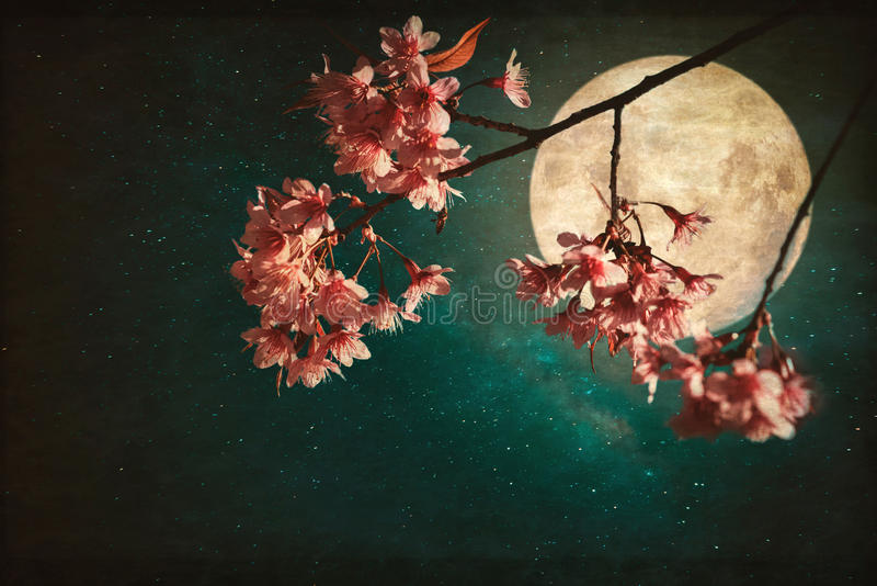 Beautiful pink cherry blossom sakura flowers in night of skies with full moon and milky way stars. stock images