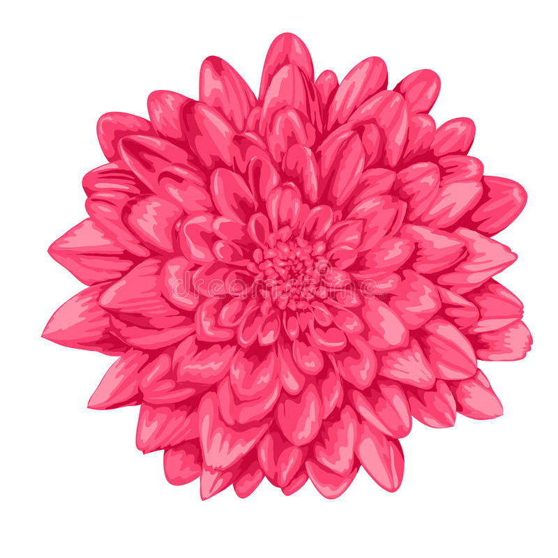 Free Beautiful Pink Dahlia Isolated On White Background. Royalty Free Stock Photos - 42119618