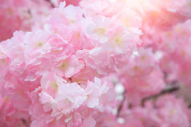 Beautiful pink flower background stock photos