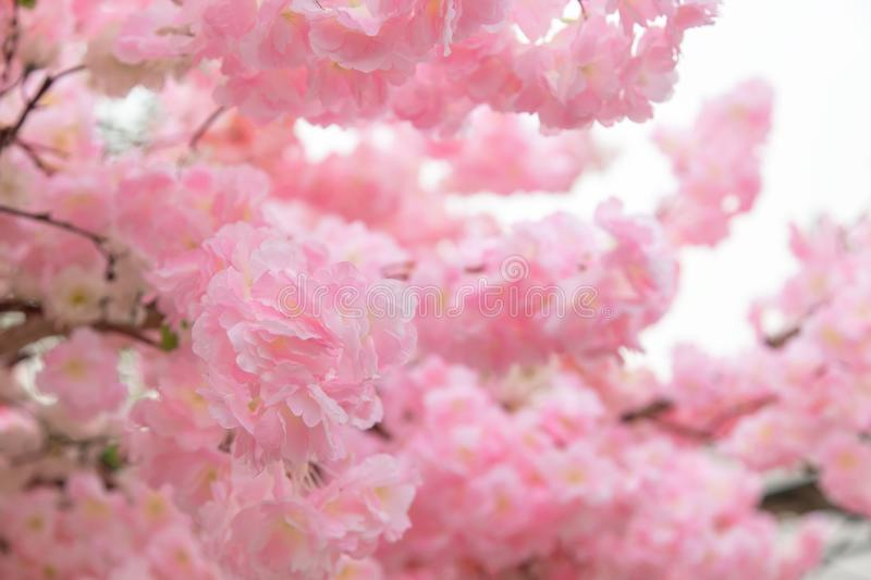Beautiful pink flower background stock photography