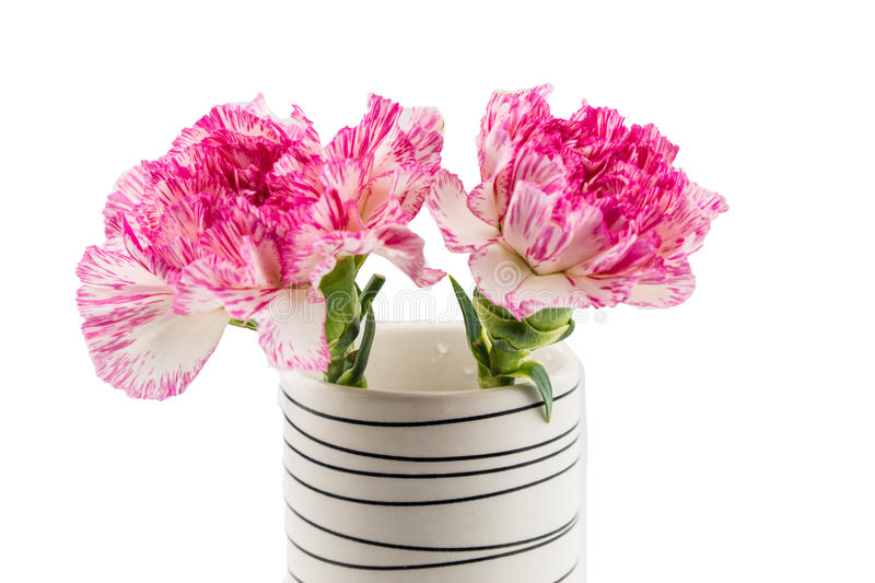 Beautiful pink flower in blackwhite vase on white background stock download beautiful pink flower in blackwhite vase on white background stock photo image mightylinksfo Image collections