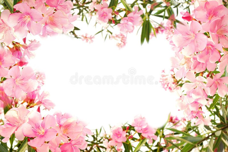 Beautiful pink flower border on white isolated stock photo image download beautiful pink flower border on white isolated stock photo image of beautiful flora mightylinksfo Images