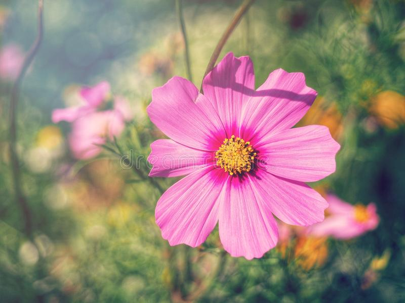 Beautiful pink flower stock photo