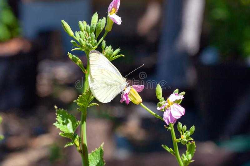 Beautiful pink flower and fluttering butterfly stock image