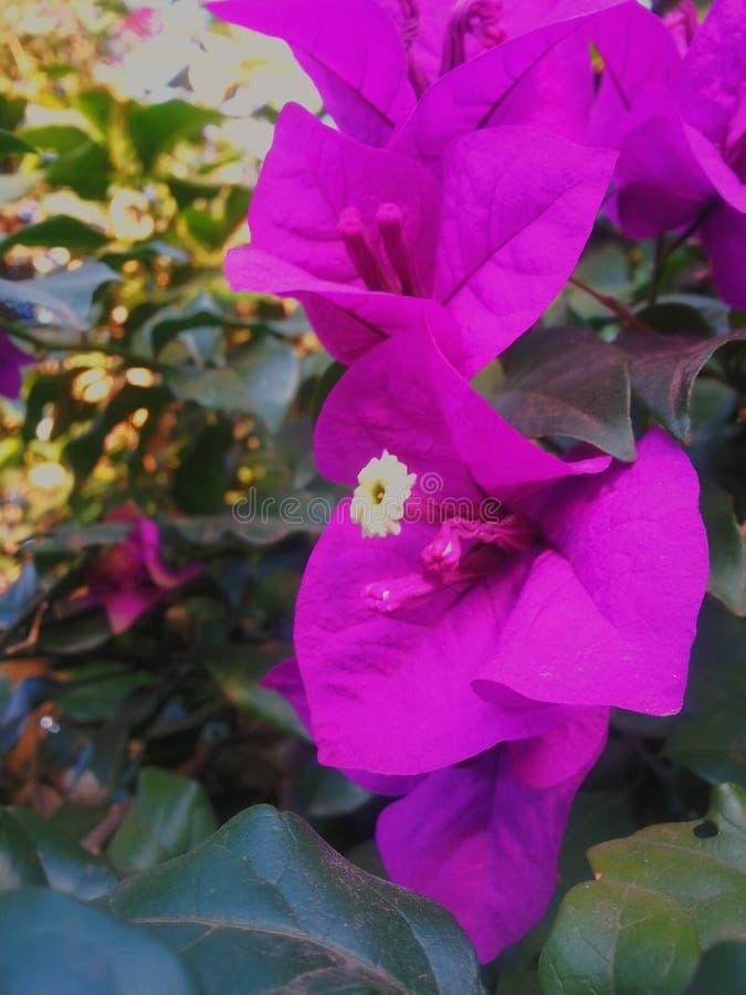 Beautiful Pink Flower stock photo