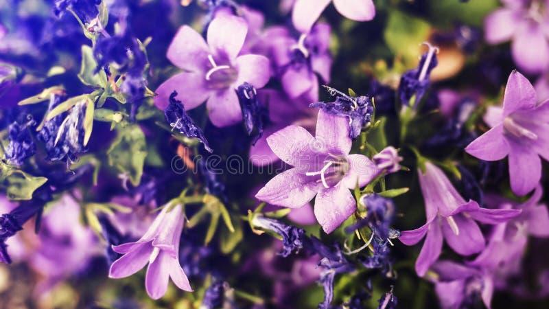 a s d f g h j k l z stock photography