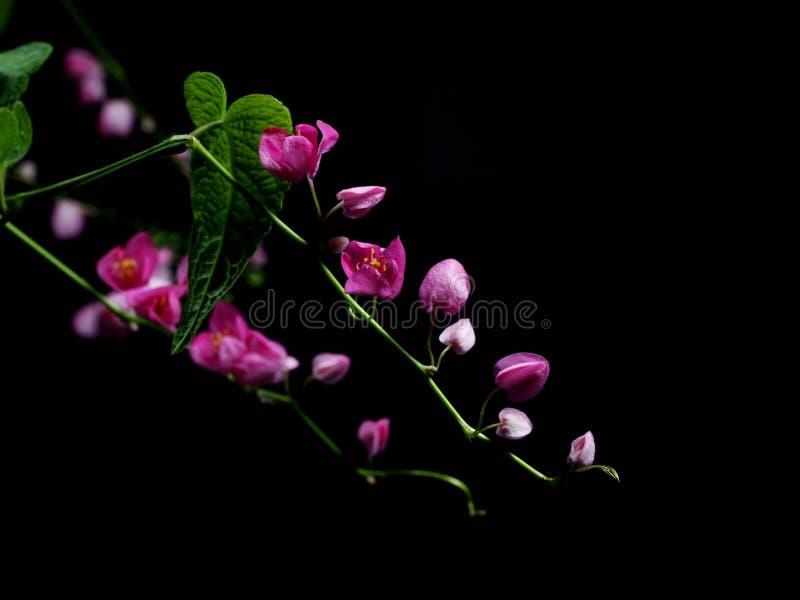 Beautiful pink flowers royalty free stock photo