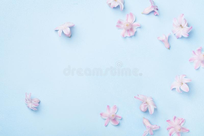 Beautiful pink flowers on blue background top view. Pastel colors. Flat lay style. Mother or woman day greeting card. stock photos