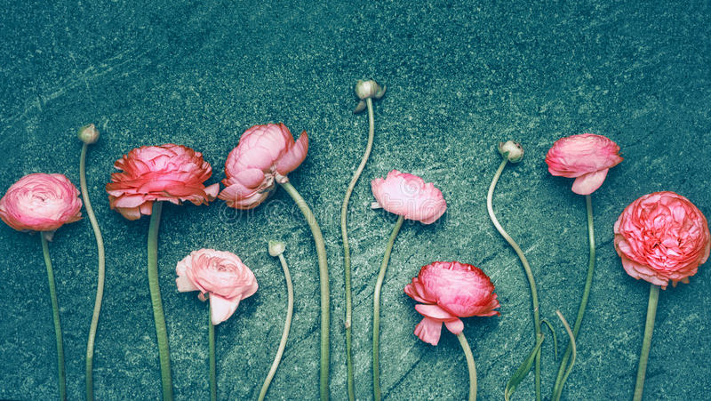 Beautiful pink flowers on dark turquoise rustic background. Floral border, top view stock photography