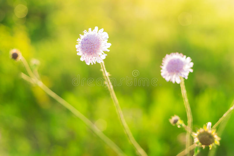 Beautiful pink flowers and green field stock photos