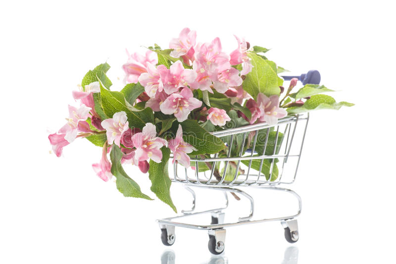 Beautiful pink flowers in the truck. On a white background royalty free stock image