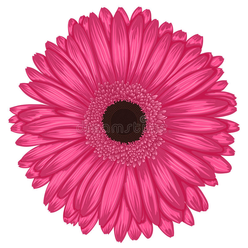 Free Beautiful Pink Gerbera Isolated On White Background . Stock Images - 42295064
