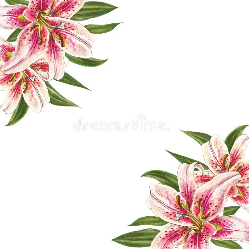 Beautiful pink lily corner frame. Bouquet of flowers. Floral print. Marker drawing. stock illustration