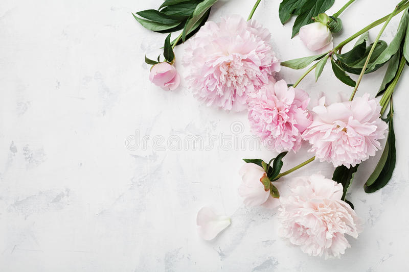 Beautiful pink peony flowers on white table with copy space for your text top view and flat lay style. stock images