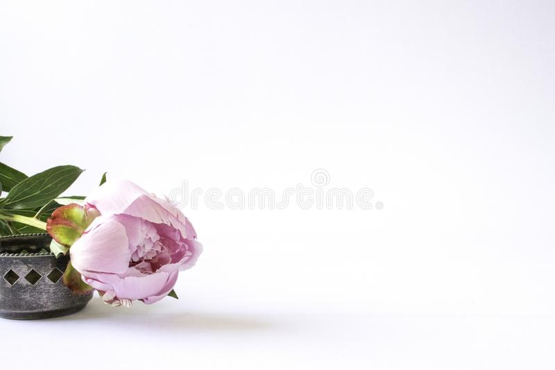 Pink peony on a white desk royalty free stock photo