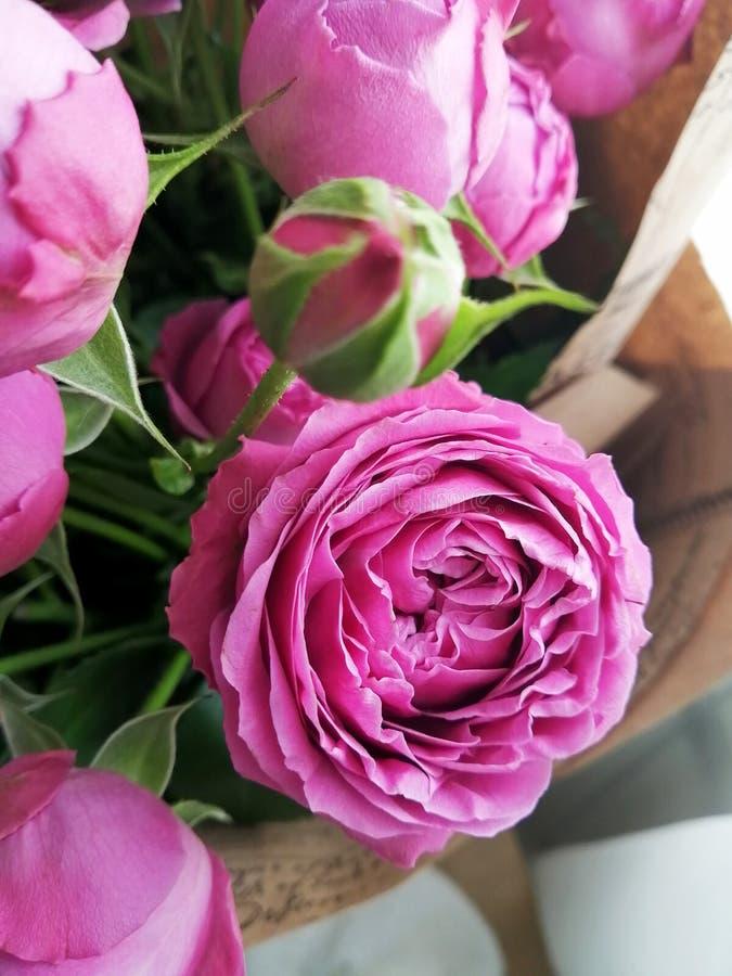 Beautiful pink pion-shaped rose.Bouquet Shrub roses stock photo