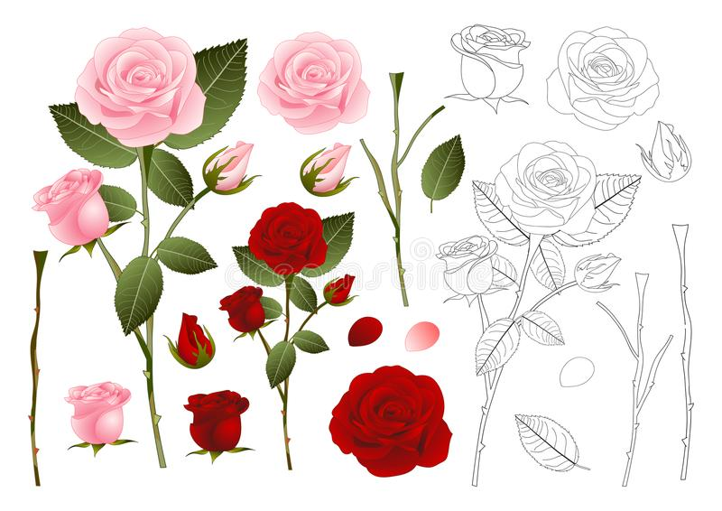 Beautiful Pink and Red Rose Outline - Rosa. Valentine Day. Vector Illustration. Isolated on White Background royalty free illustration