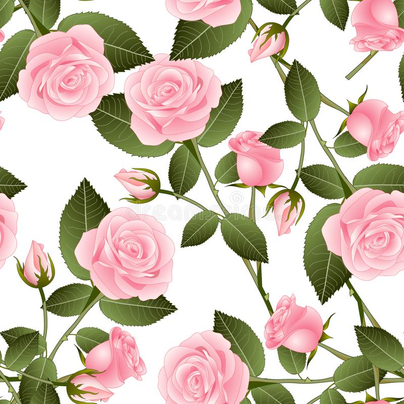 Beautiful Pink Rose - Rosa on White Background. Valentine Day. Vector Illustration. royalty free illustration