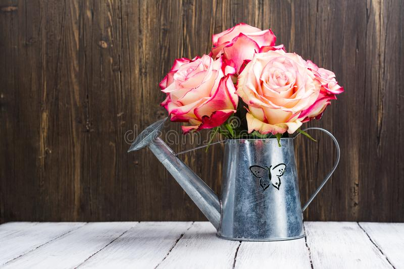 Beautiful pink rose in a tin watering can royalty free stock images