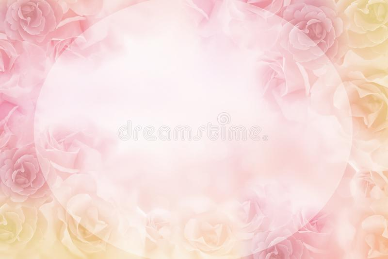 Beautiful pink roses flower border on soft background for valentine royalty free stock images