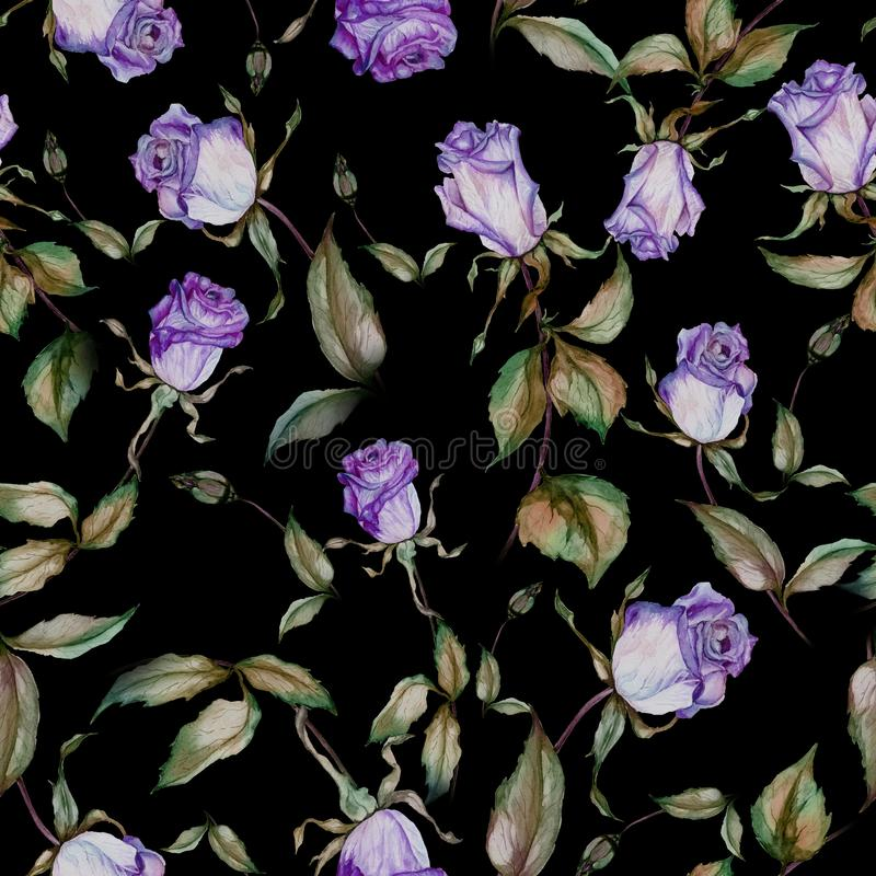 Beautiful pink roses and green leaves on black background. Seamless floral pattern. Watercolor painting. Beautiful purple roses on stems with green leaves on stock illustration