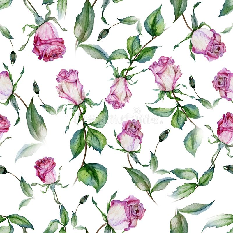 Beautiful pink roses and green leaves on white background. Seamless floral pattern. Watercolor painting. Beautiful pink roses on stems with green leaves on stock illustration
