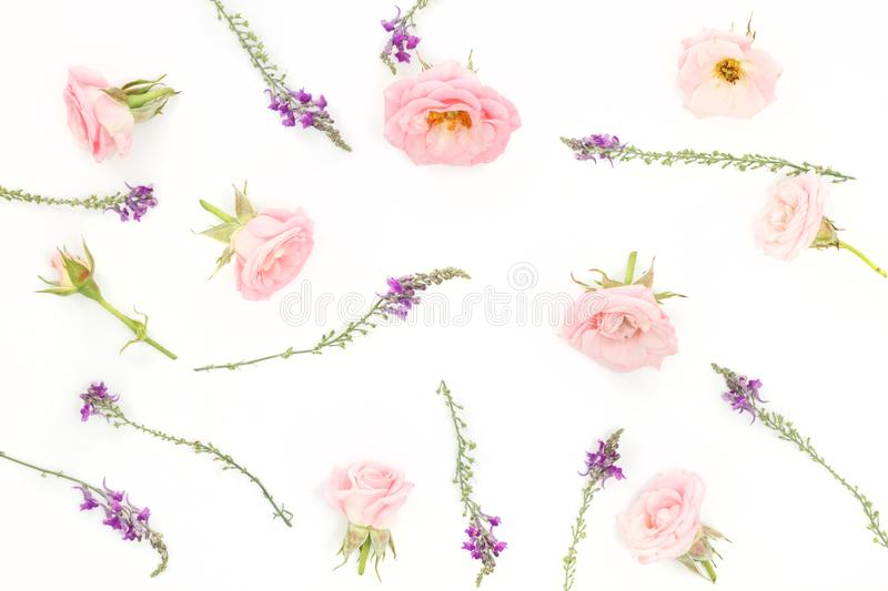 Beautiful pink roses heads on pink background stock image