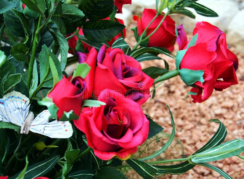 Roses. Pink roses and green leaves, natural image stock images