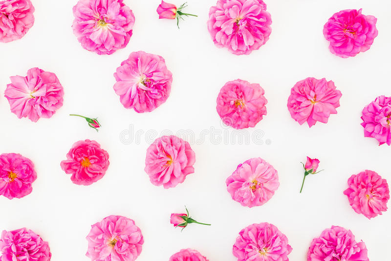 Beautiful pink roses on white background. Flat lay, top view. Floral lifestyle composition or pattern. Beautiful pink roses on white background. Flat lay royalty free stock image