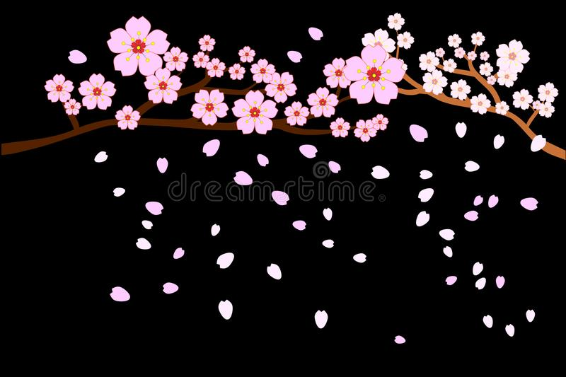 Full bloom cherry blossoms and blowing/flying petals isolated on black background. Vector illustration, EPS10. royalty free illustration