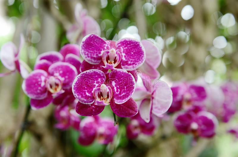 Beautiful pink spotted orchid stock photos