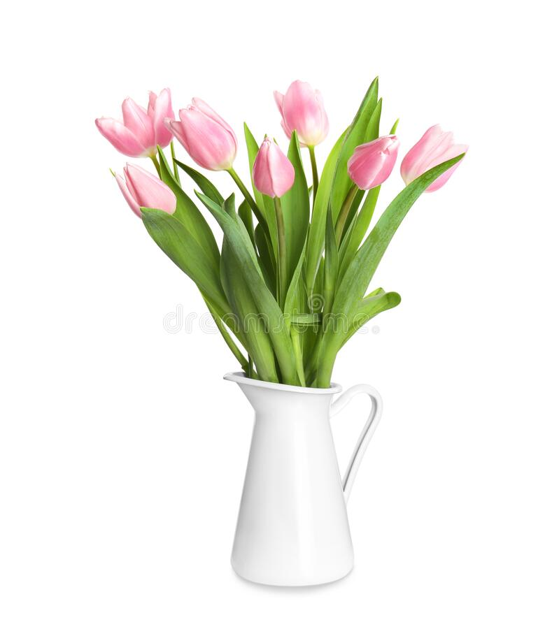 Beautiful pink spring tulips in vase isolated royalty free stock images