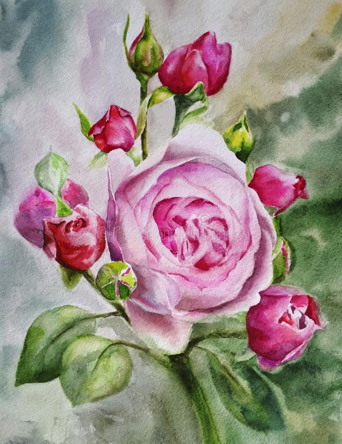Beautiful pink tea rose on a background of green summer foliage, painted with watercolor hands royalty free illustration