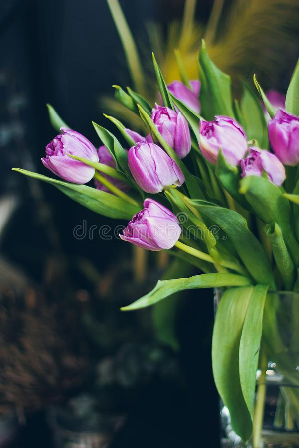 Beautiful pink tulips in vase royalty free stock photo