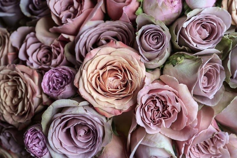 Beautiful pink, violet and peach roses wedding bouquet closeup macro royalty free stock photos