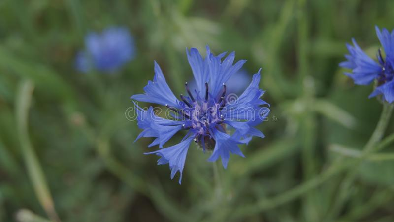 Beautiful Plant royalty free stock photo
