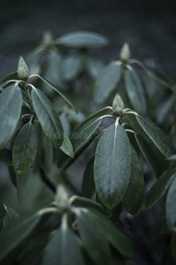A beautiful plant closeup stock images