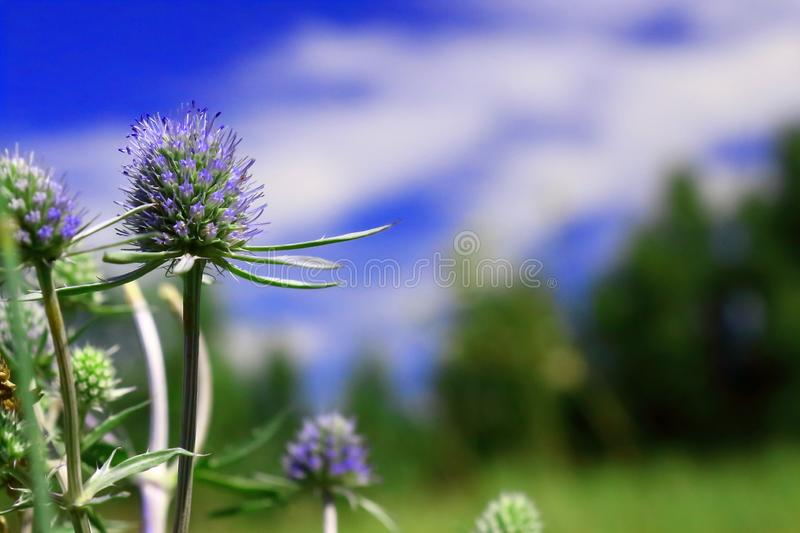 Beautiful plant in the forest stock photo