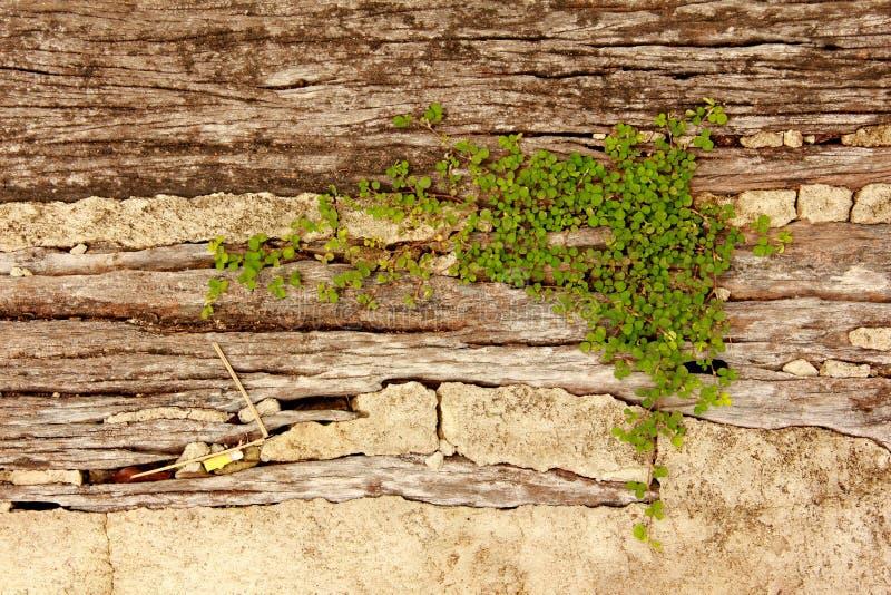 Beuatiful plant grow up on cracked stone. royalty free stock photography